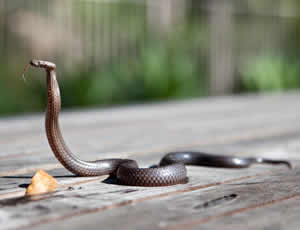 Snake proof chicken coop