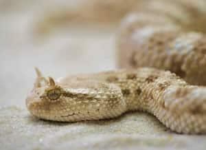 Snake safe
