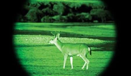 Can deer see green light?