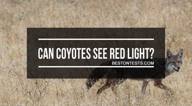 Can Coyotes See Red Light? Choose Proper Light For Coyote Hunting